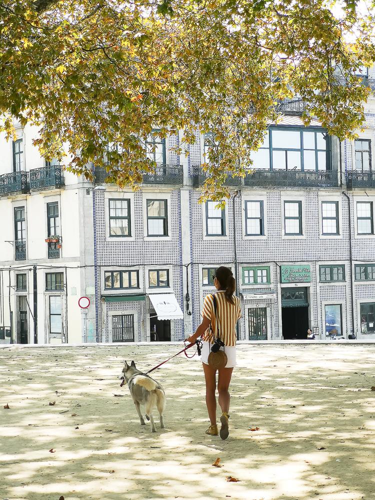 ¿Qué hacer con perro en Oporto ?