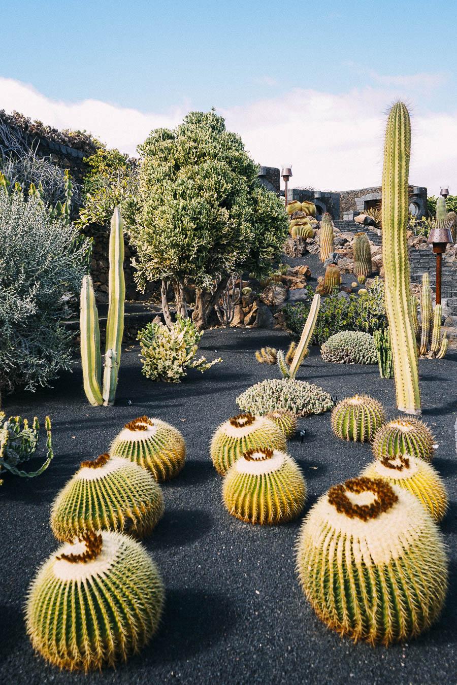 El Jardín de Cactus
