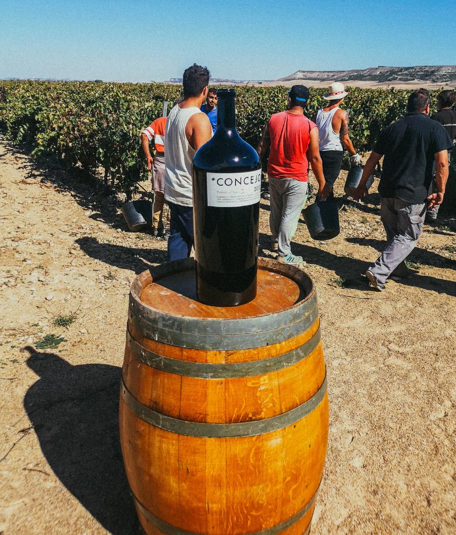 Ruta del Vino Cigales (2º parte)