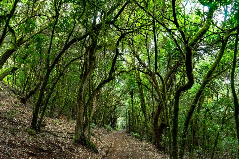 5 rutas para disfrutar de la naturaleza en La Gomera