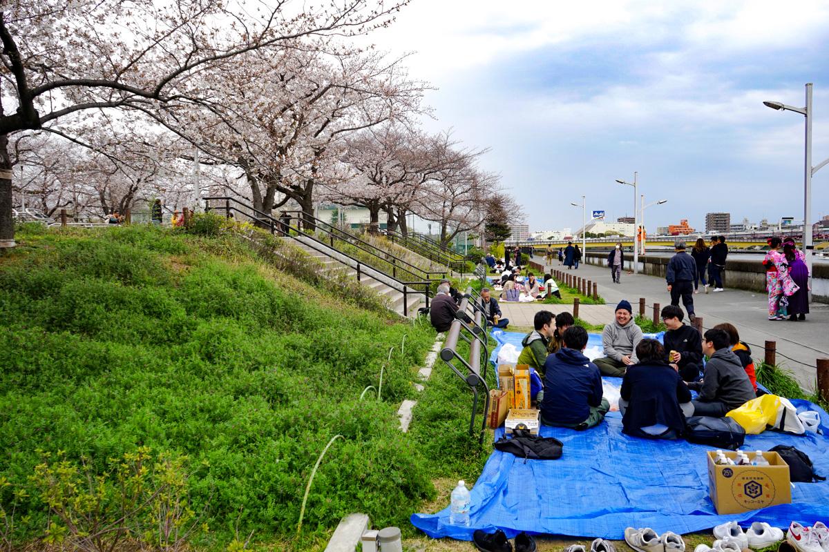 Sakura en Sumida Park: Tokio
