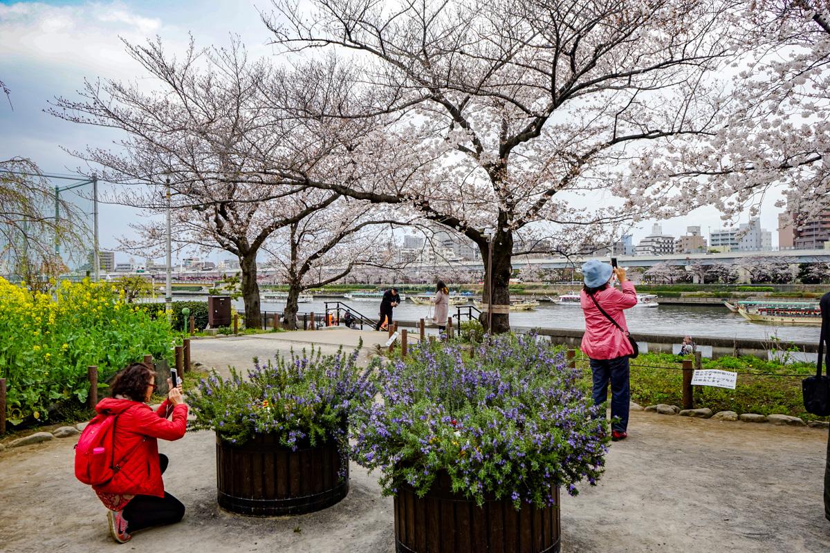 Sakura en Sumida Park con vistas al río