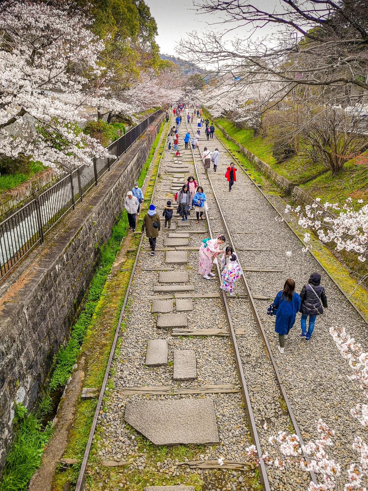 Descubre la primavera en Japón