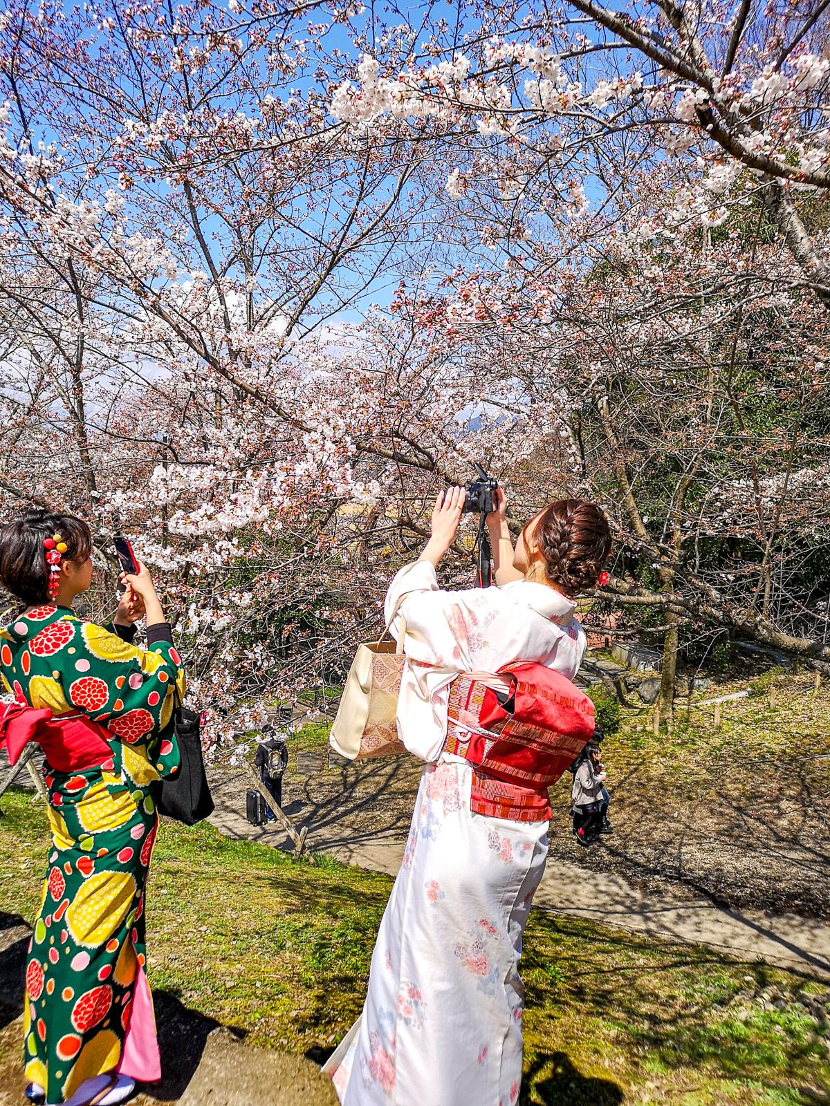Chicas vestidas de geishas fotografiando cerezos