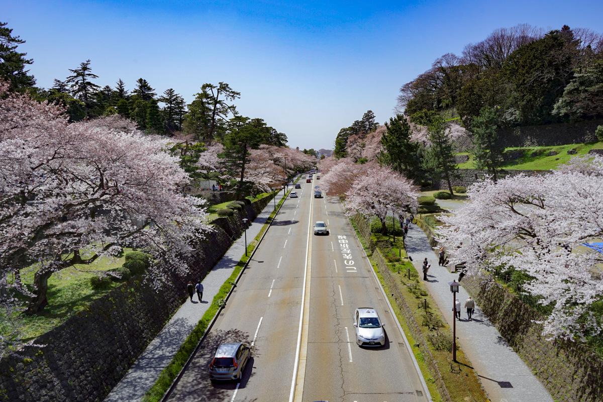 Cerezos en flor en Kanazawa