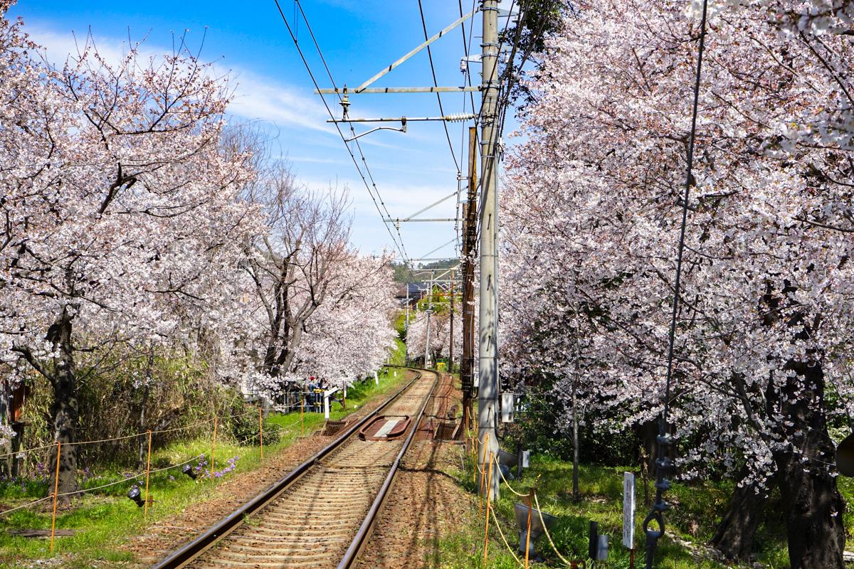 Esperando a ver el famoso tranvía de Arashiyama