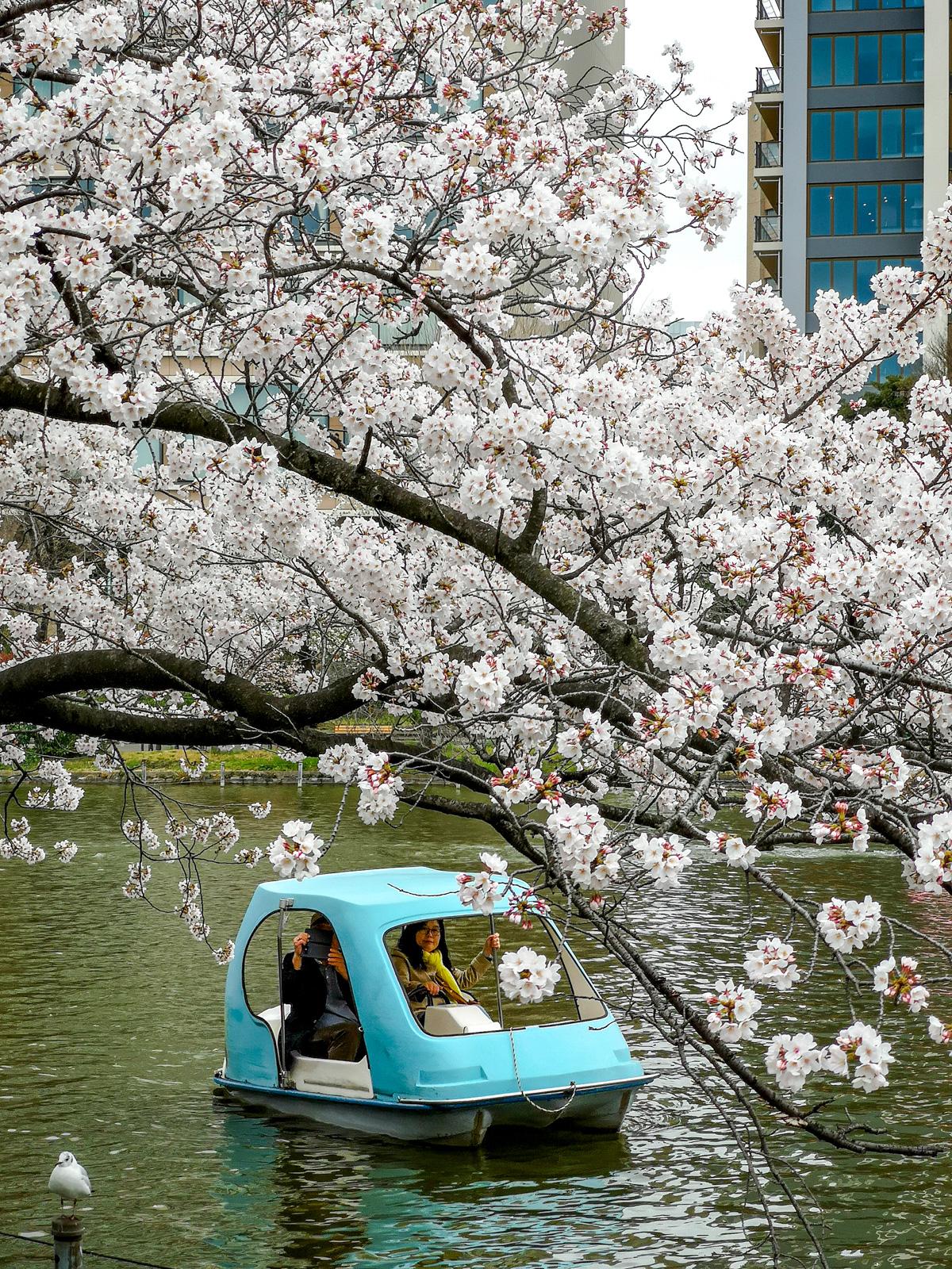estanque de Shinobazu en el Parque de Ueno