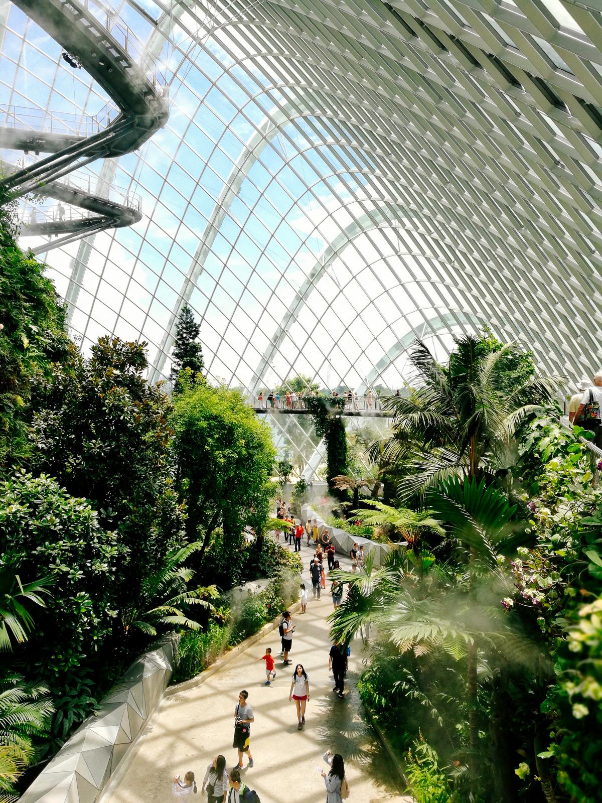 Cloud forest o la selva nubosa